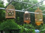 Hanging Birdcages in the Park