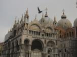Pigeon flies over S. Marco, Venice