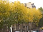 The trees from Notre Dame