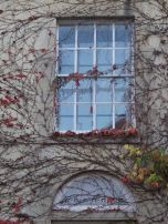 Technicolor Ivy