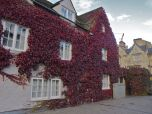 Red Ivy taking over this buildings facade