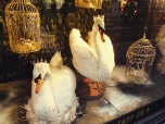 Queenly Geese