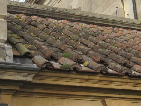 Rounded tile roof of baths